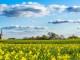 tarım9.3.16