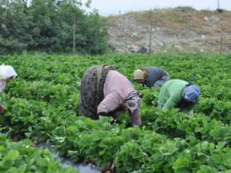 tarım30.4.16