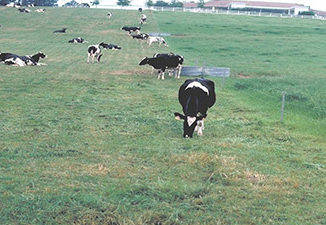 tarım30.4.16-2